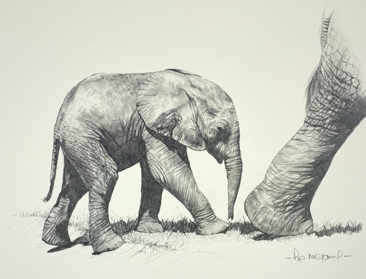Baby Elephant Sketch by pip mcgarry -  sized 14x12 inches. Available from Whitewall Galleries
